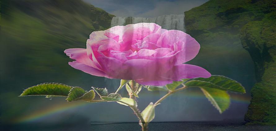 Acqua di Rose Damascena