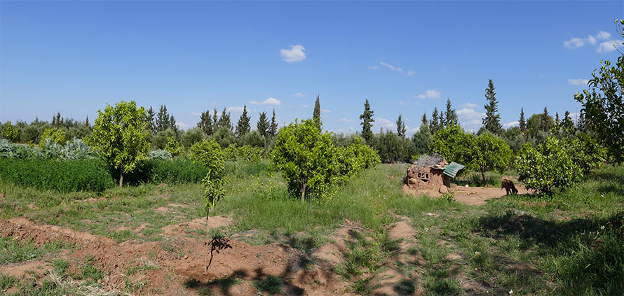 Investire nell'agricoltura a Marrakech