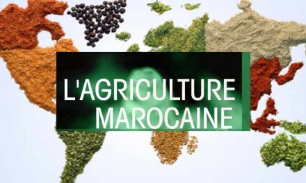 Missione in Marocco per conoscere il sistema Agricolo