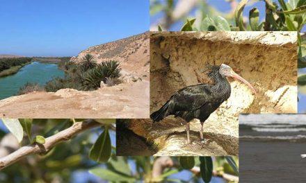 Parco Nazionale di Souss Massa
