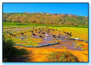 Parco Nazionale Souss Massa