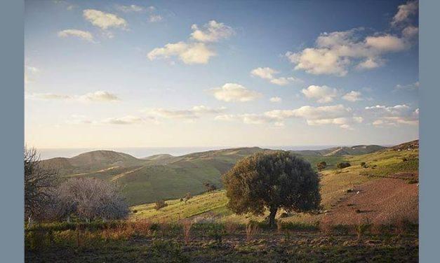 Rohuna Marocco e il suo orto botanico