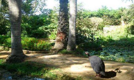 Foresta di Mamora Rabat