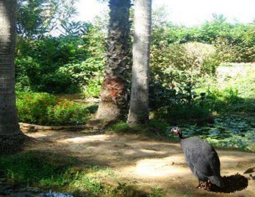 Foresta di Mamora polmone verde Rabat