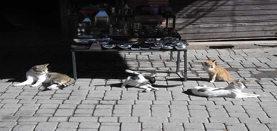 I gatti di Marrakech